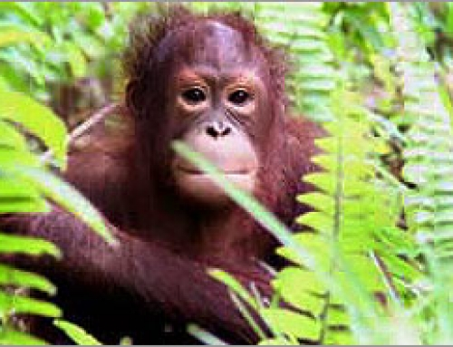 FACE TO FACE WITH BORNEO'S NATURE